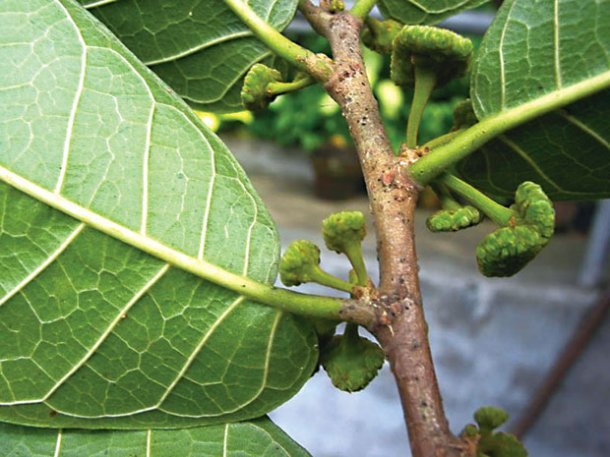 Анчар — дерево смерти - Все актуальные новости