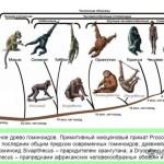 primat2
